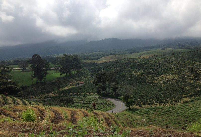 Bob LaGarde - Road trip through Central America - Coffee bean farming alongside highway 11 coming down out of the mountains
