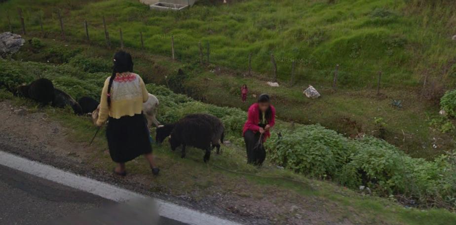 Bob LaGarde - Road trip through Central America - Indigenous women herding goats along the roadside near Comitan in Chiapas, Mexico