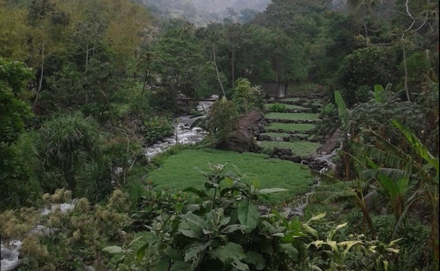 Bob LaGarde - Road trip through Central America - Lush hillside along a small stream near San Miguel