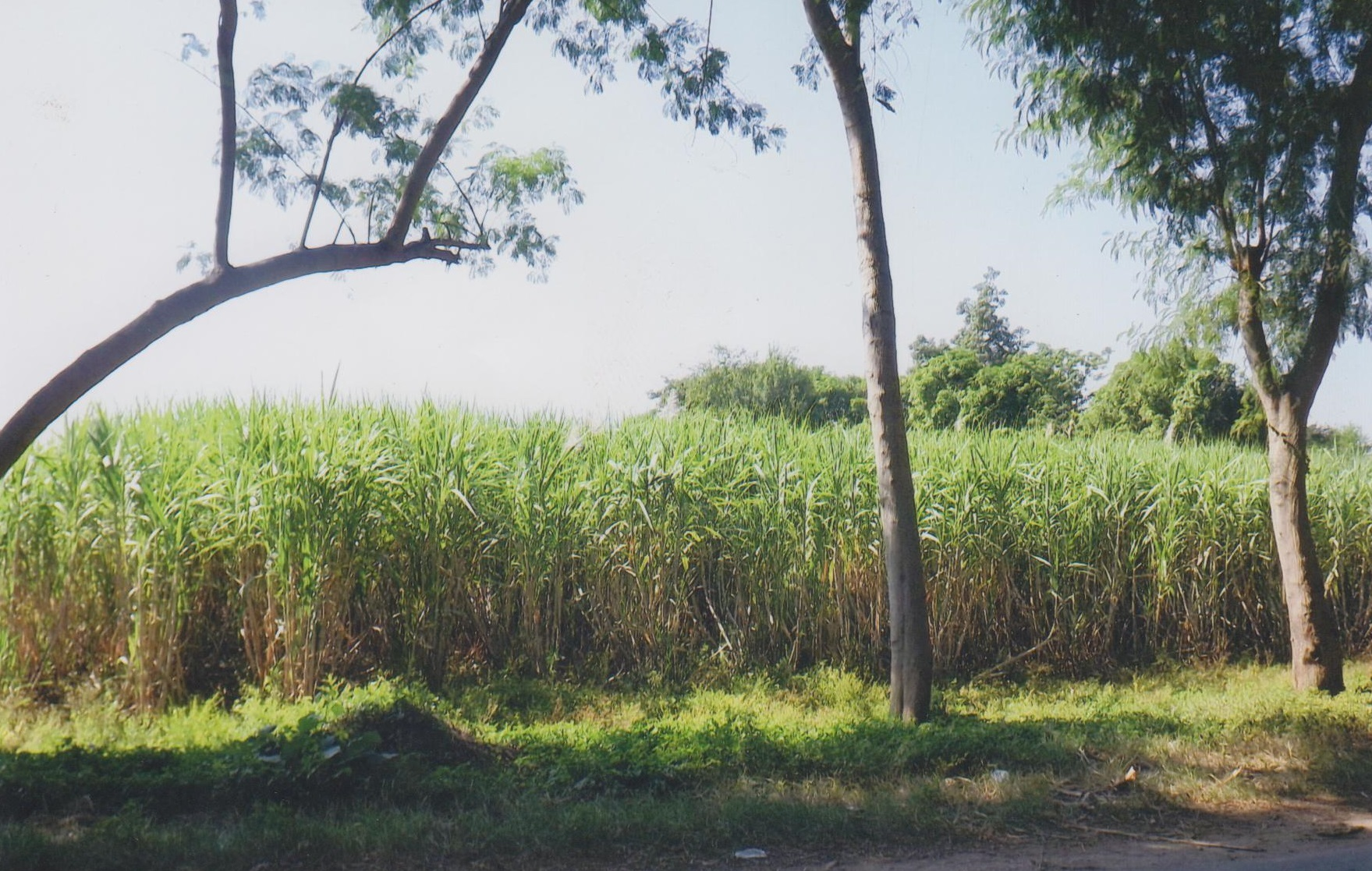 Bob LaGarde - Road trip through Central America - Sugar cane fields alongside highway CA-2 outside of Escuintla